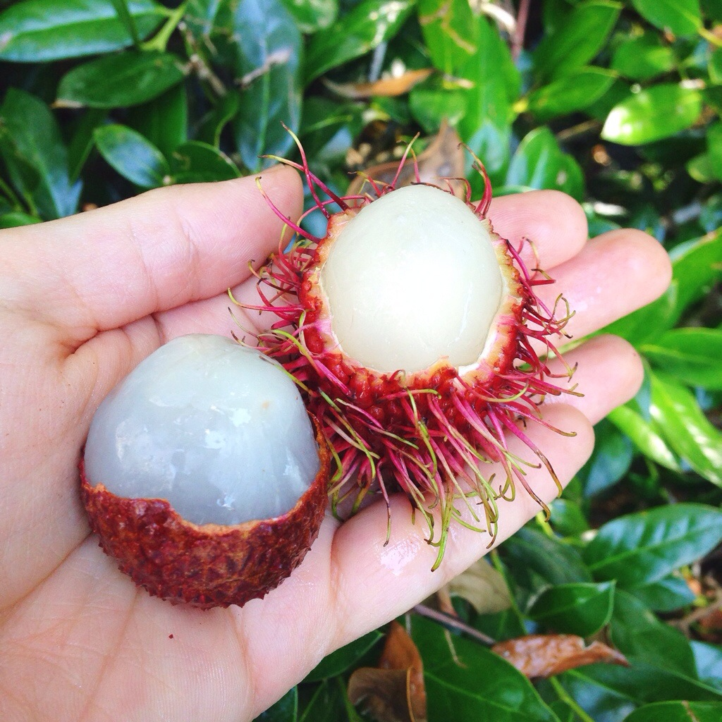 rambutan fruit litchi fruit
